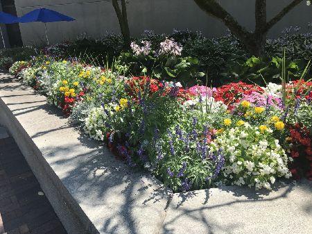 Seasonal Plantings